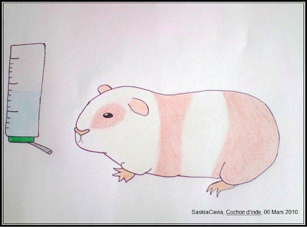 Concours de dessin mars avril 2010 page 1 concours forum de la caverne des cochons d 39 inde - Dessin d un cochon ...