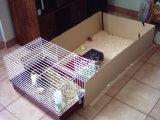 La caverne des cochons d 39 inde cage - Fabriquer cage cochon d inde ...